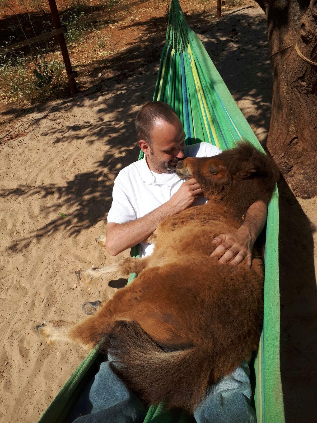 Eine Familie fliegt nach Spanien zu Pequeno Rancho